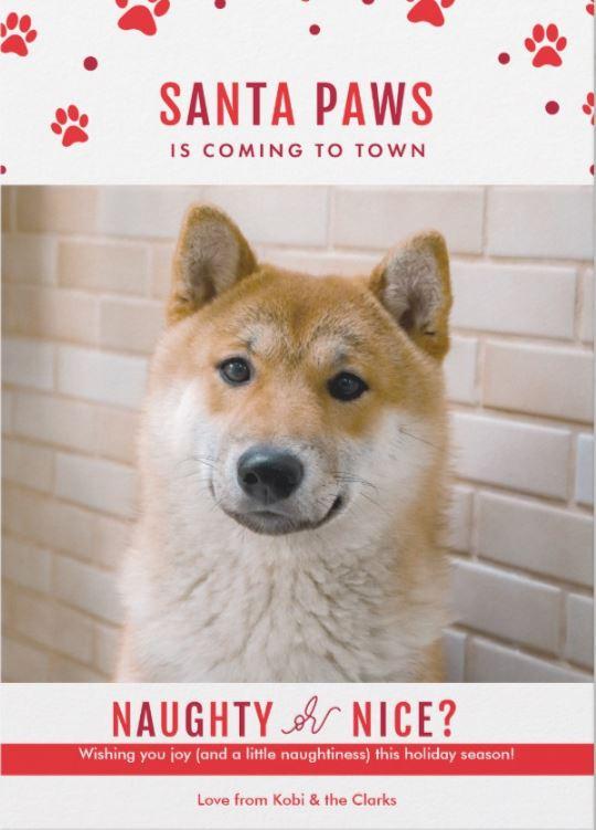 santa paws dog christmas card