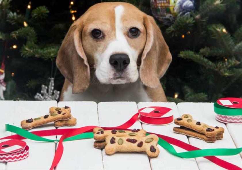 Home-made dog treats