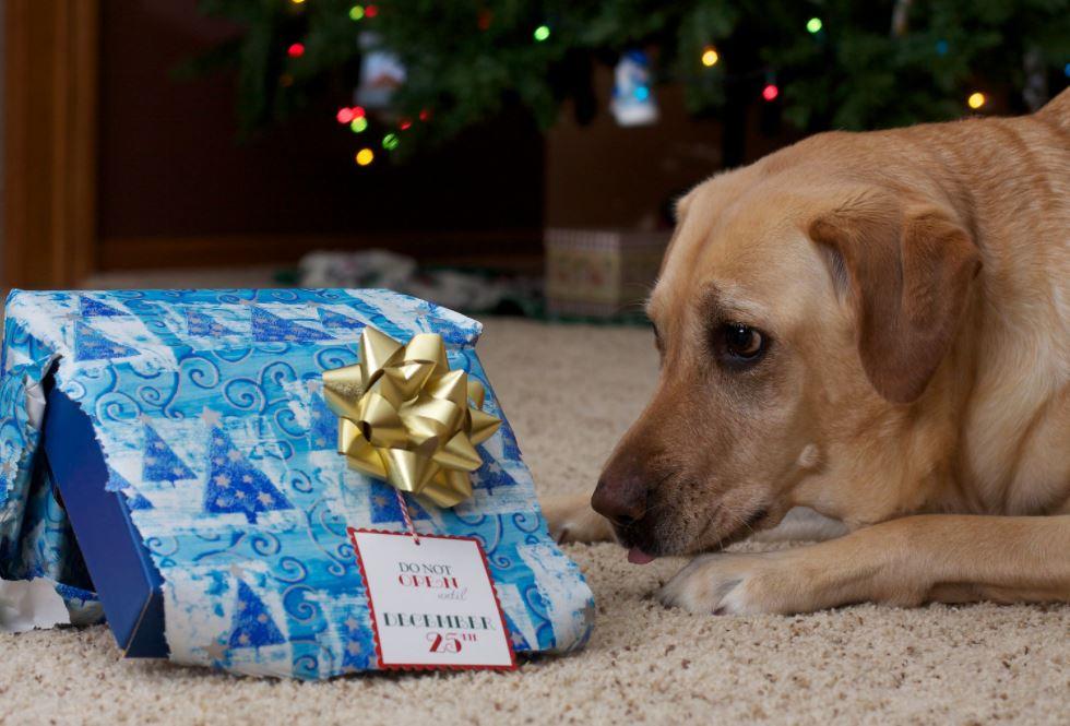no peeking cute dog photo at Christmas