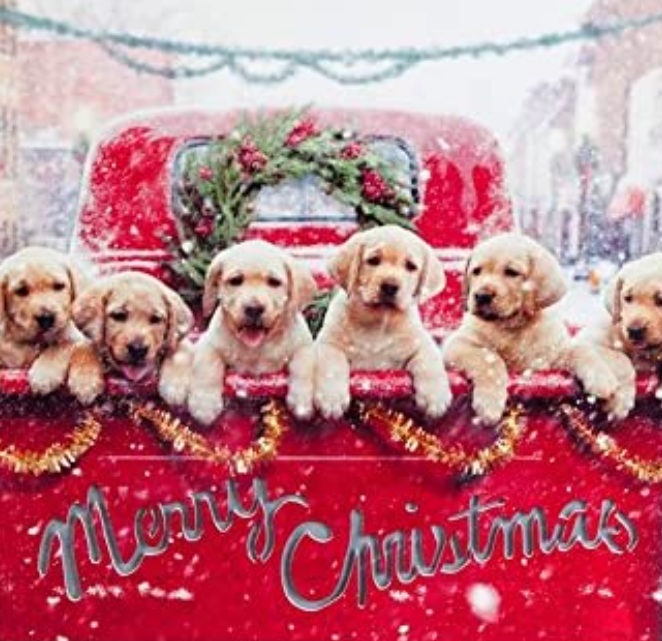 lab puppies in truck at Christmas