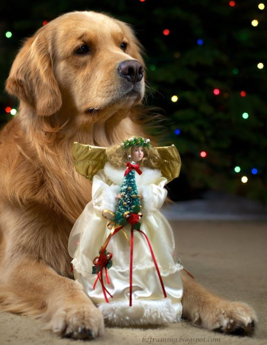 dog with Christmas angel