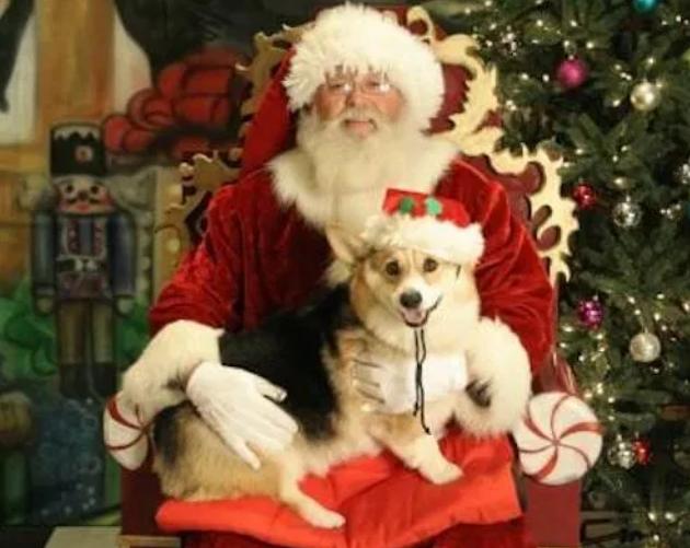 Cute dog on Santa's lap