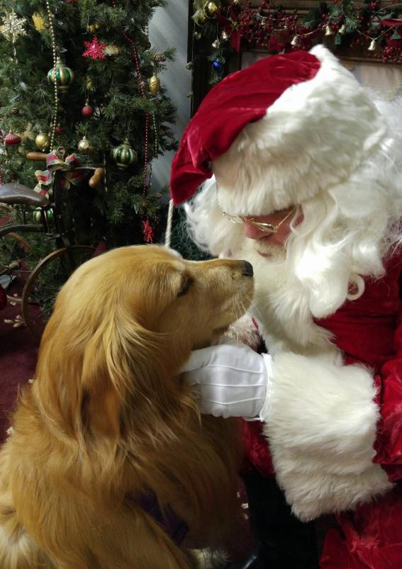 Golden retriever with Santa Claus