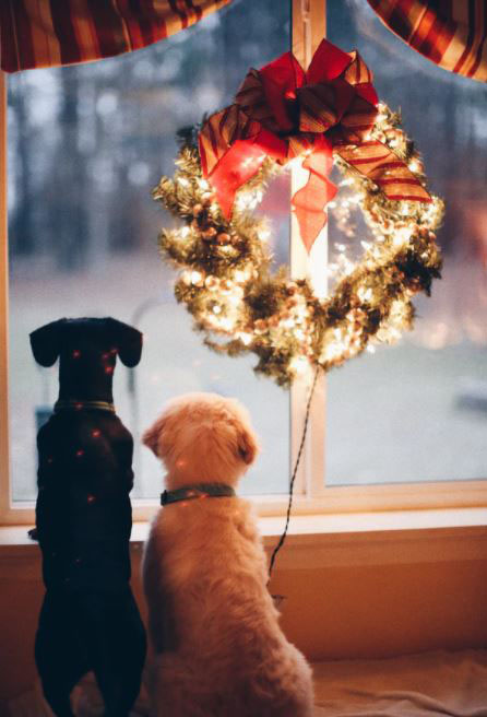 dogs waiting for Santa Claus