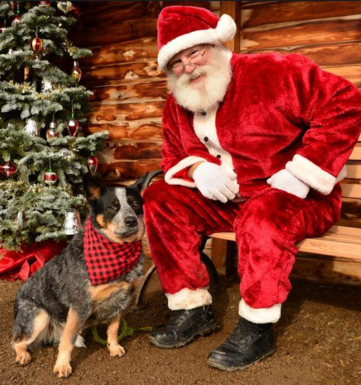 Cute Christmas photo with dog and Santa Claus