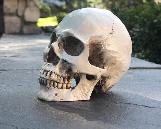 skull for Halloween decorations